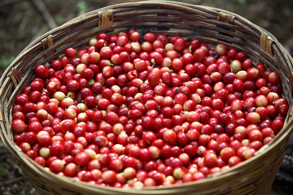 Different Coffee Beans Types